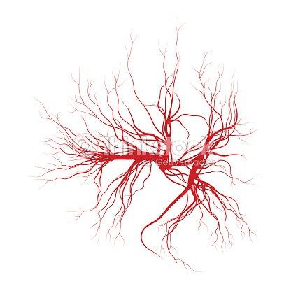 Human Veins Red Blood Vessels Design Vector Illustration Vector Art