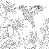 Hummingbird and hibiscus flowers. Freehand sketch for adult coloring book page.