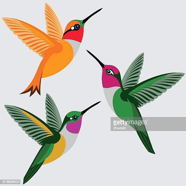 Hummingbirds Set - Rufous Hummingbird, Anna's Hummingbird, Bahama Woodstar Hummingbird