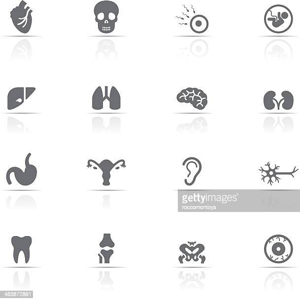 Icons set, Human Body