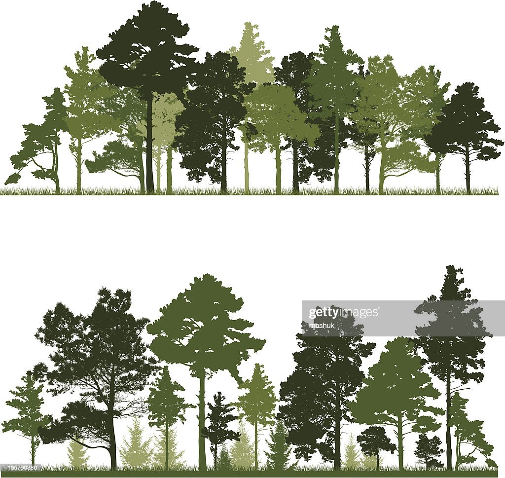 Illustration of a conifer tree in forest : Vector Art