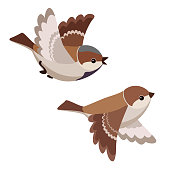Vector illustration of two cartoon flying house sparrows isolated on white background