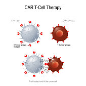 CAR T immunotherapy. Artificial T cell receptors are proteins that have been engineered for cancer therapy (killing of tumor cells). genetically engineered. Vector diagram for medical, educational and