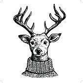 Hand drawn pen and ink vector drawing of a reindeer head. Funny hipster vintage style portrait illustration of a deer dressed in knitted turtleneck sweater, isolated on white background.