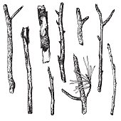 vector set of ink drawing wood twigs,isolated hand drawn nature objects, tree branches, sticks, hand drawn vector illustration