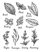 Herbs set. Collection of ink sketches isolated on white background. Hand drawn vector illustration. Retro style.