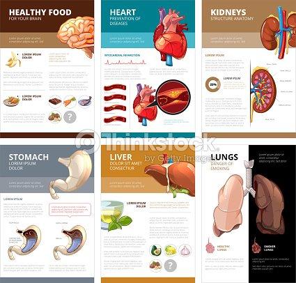 Internal Human Organs Chart Diagram Infographic Vector Brochure ...