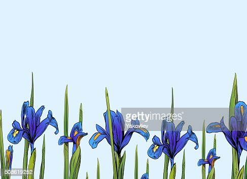 Iris flowers card backgrounds. Hand drawn vector illustration : Vector Art