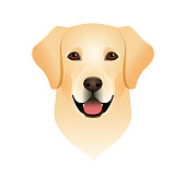 Isolated colorful head and face of happy labrador retriever on white background. Color flat cartoon breed dog portrait