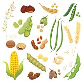Cute and tasty legumes, grains and nuts collection. Vector illustration.