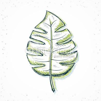 feuilles de palmier isol de style dessin la main clipart vectoriel thinkstock. Black Bedroom Furniture Sets. Home Design Ideas