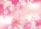 It is a beautiful sakur in Japan