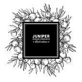 Juniper vector drawing frame. Isolated vintage  template of berry on branch. Organic essential oil engraved style sketch. Beauty and spa, cosmetic ingredient. Great for label, packaging design.