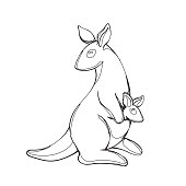 Vector illustration of kangaroo in continious line graphic style, black countour outline sketch isolated on white