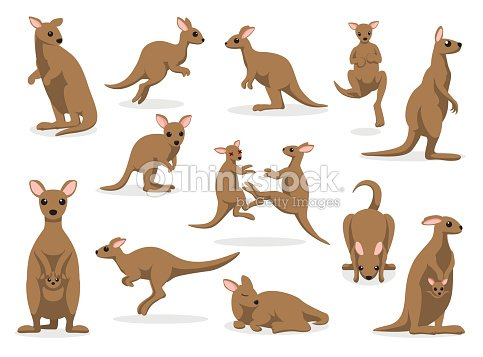 12 Kangaroo Poses Vector Illustration : stock vector