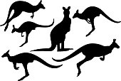 Hi Quality Kangaroos silhouette