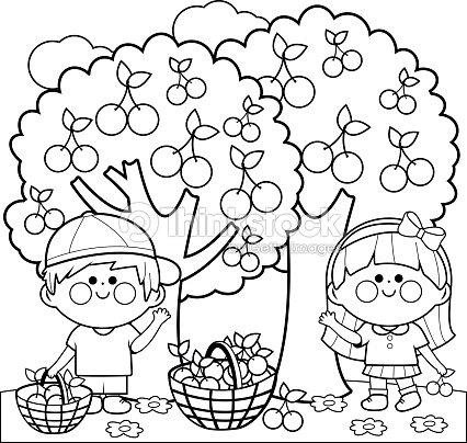 Bambini raccolta di ciliegie libro da colorare pagina arte for Disegni da colorare ciliegie