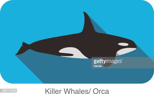 Killer Whale swimming in the sea flat icon design