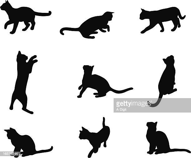Kitten Life Vector Silhouette