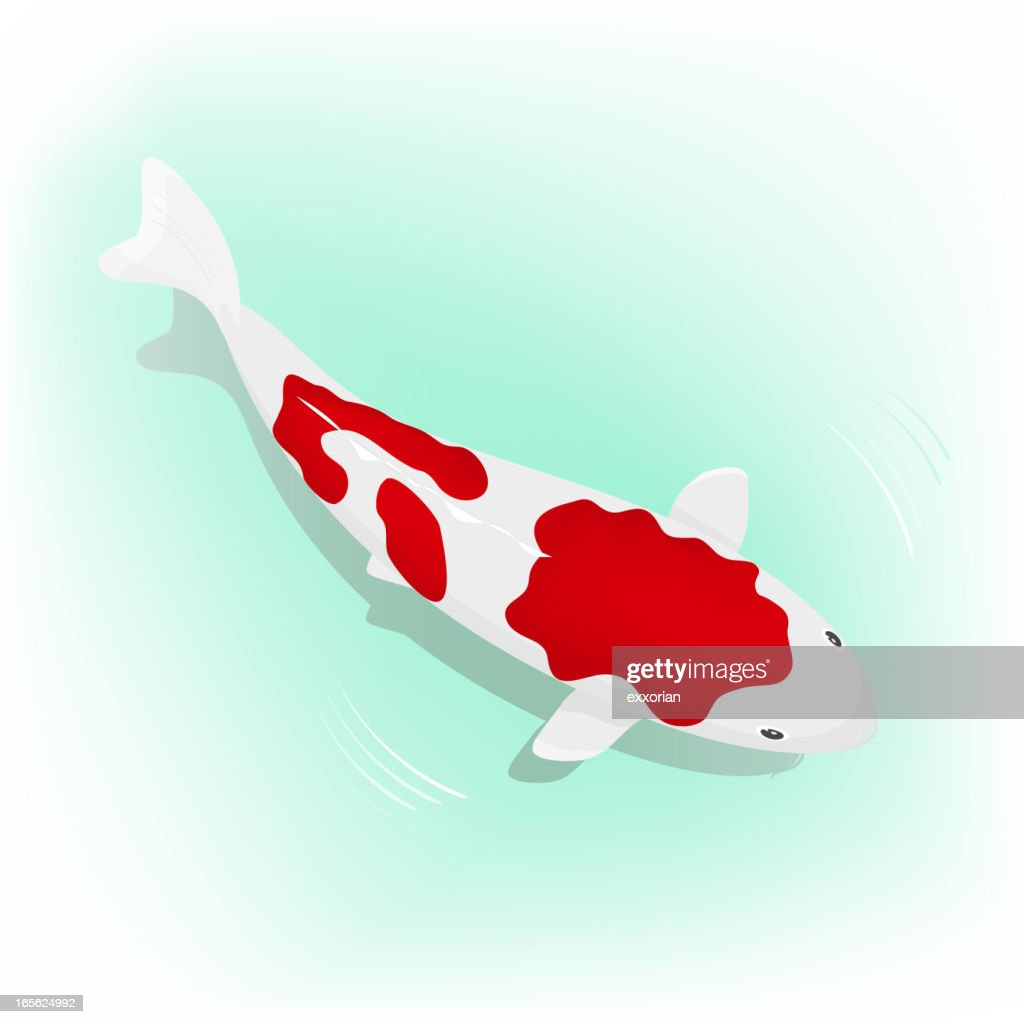 Koi carp vector art getty images for Koi fish vector