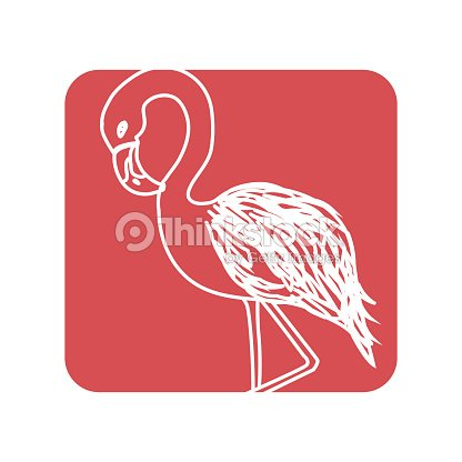 Label beauty and exotic flamingo bird animal