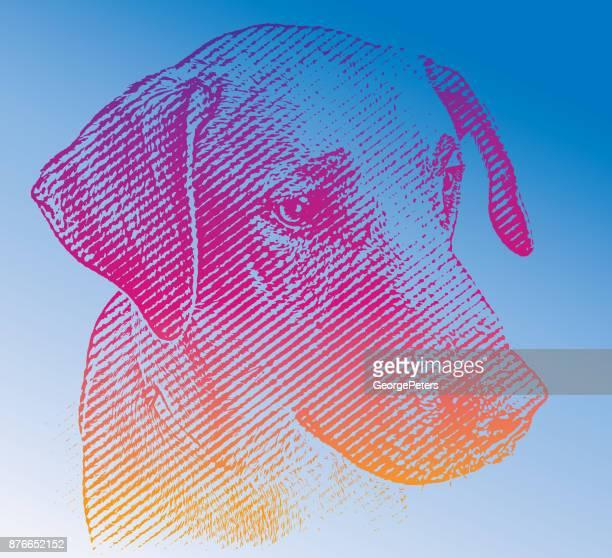 Labrador Retriever mix Hund warten angenommen werden