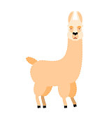 Lama Alpaca angry. Animal evil emoji. Vector illustration