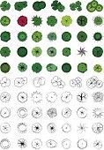 Landscape Design Symbols, Trees Top View, Vector, Colour and outline, Sketch
