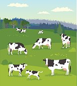 Various of cows pasturing with their baby cows on fresh green meadow