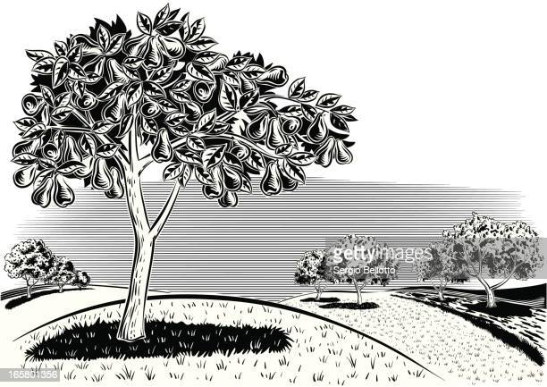 Fruit Tree Stock Illustrations And Cartoons Getty Images