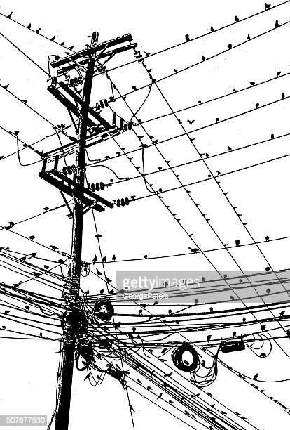 Large Group of Birds On A Tangle of Wires