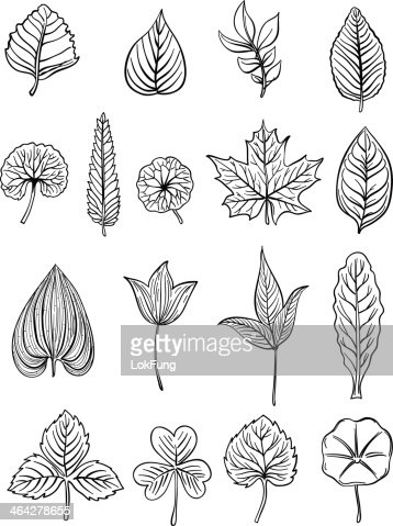 Leaf Collection In Black And White Illustration Vector Art ...