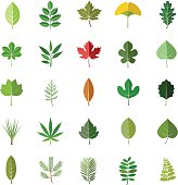 Leaves color vector icons