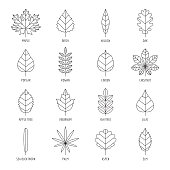 Leaves types with names outline design, vector icon set.