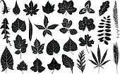 Illustration of different leaves isolated