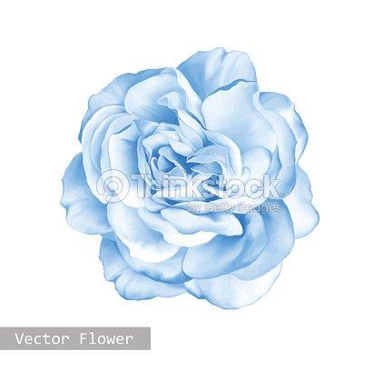 Light Blue Rose Flower Vector Art | Thinkstock