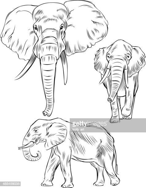 Line Drawing Elephant Face : Illustrations et dessins animés de Éléphant d asie getty