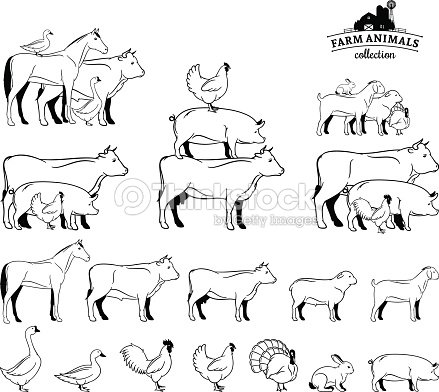 Line Drawings Of Farm Animals On A White Background stock