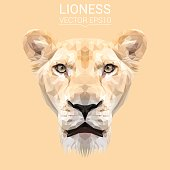 Lioness animal low poly design. Triangle vector illustration.
