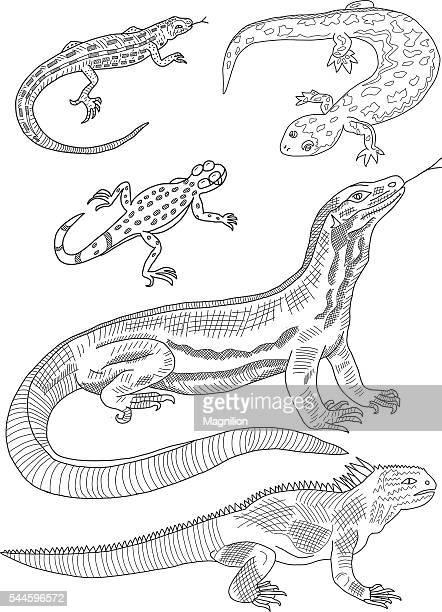 Lizard Hand Drawing