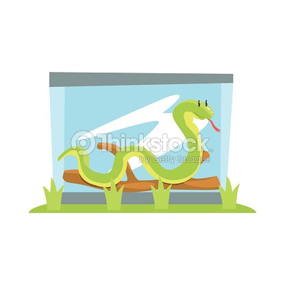 Long Boa Snake In Glass Terrarium In The Zoo With Vector Art