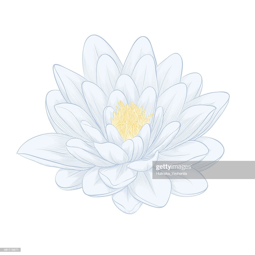 Lotus flower painted in graphic style isolated on white vector art lotus flower painted in graphic style isolated on white vector art izmirmasajfo