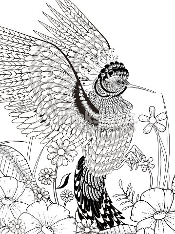 Lovely Hummingbird Coloring Page Vector Art   Thinkstock