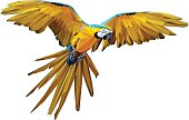 A low poly vector of a flying macaw.
