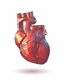 Colorful low poly human heart graphic illustration on white background