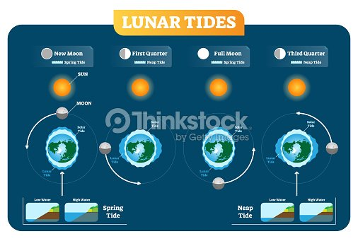 Lunar And Solar Tides Vector Illustration Diagram Poster Spring And