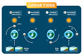 Lunar and Solar tides vector illustration diagram poster infographic. Spring and Neap tide scheme. Gravitation force influence on the water levels and coastline. Geography and astronomy science.