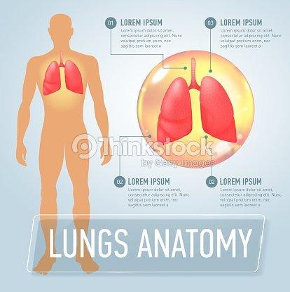 Lunge Moderne Medizinische Infografiken Inneren Organe Im ...