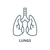 Lungs vector line icon, outline concept, linear sign