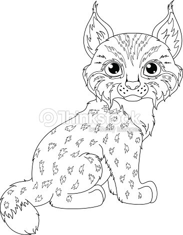 baby lynx coloring pages - photo#2